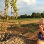 Cody enjoys blueberries!