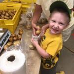 Cody helps pack potatoes