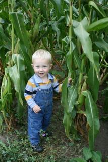 Harvest Abundance – and a Great Zucchini Bread Recipe!