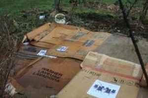 Mulch with cardboard