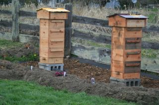 Warre Hives Set Up at Barbolian Fields