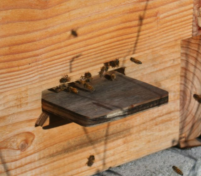 Honeybees in December