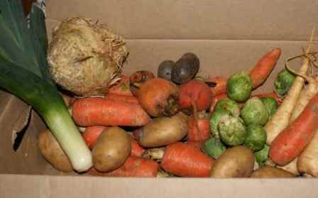 Participating in a Farm Share / Community Supported Ag program really gets you into the habit of eating with the seasons. This fall-time box was full of all kinds of roots -