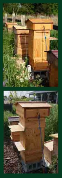 Honeybee swarm traps installed on hives