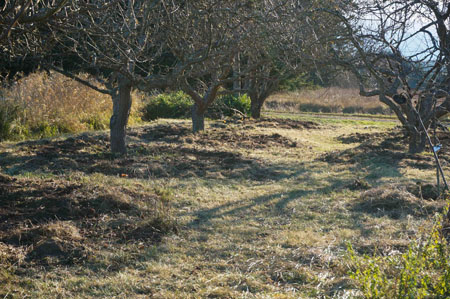 Orchard path at Barbolian Fields