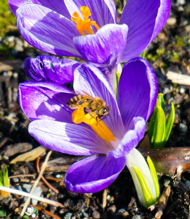 Spring Equinox: A Tipping Point