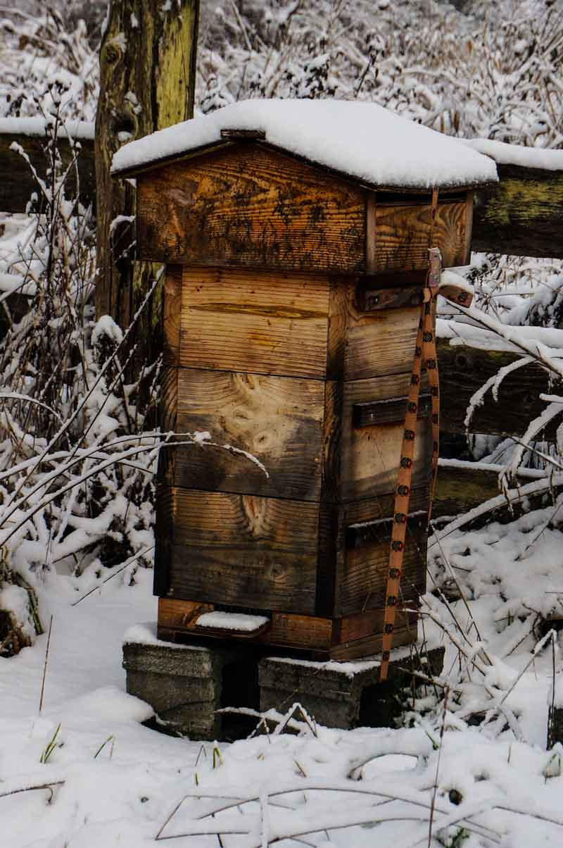 Beehive in Winter