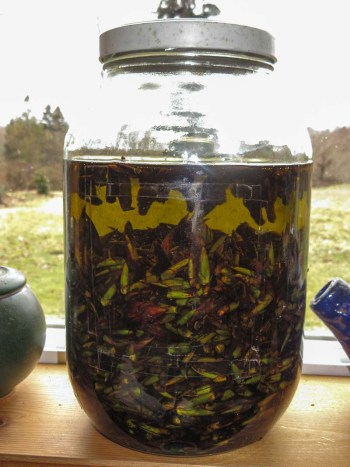Jar of cottonwood oil