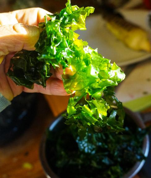 Vivid Green Sea Lettuce