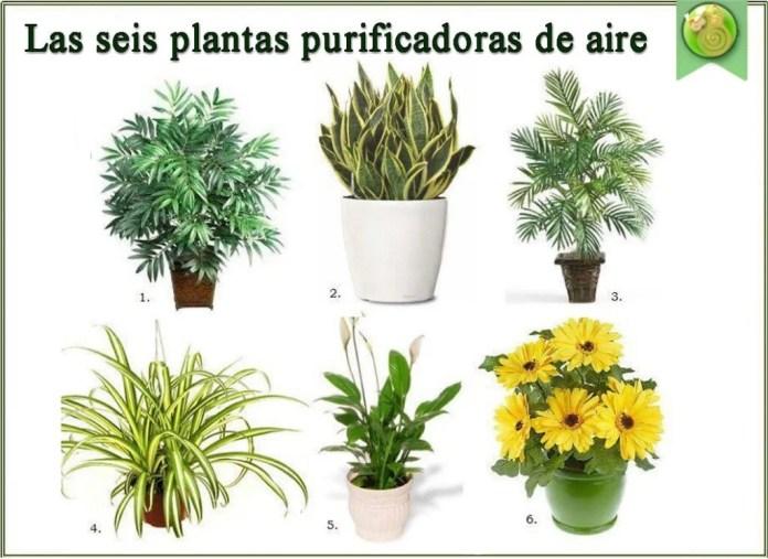 6-plantas-para-purificar-el-aire