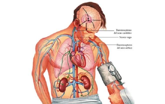 ejercicio para bajar la presión arterial