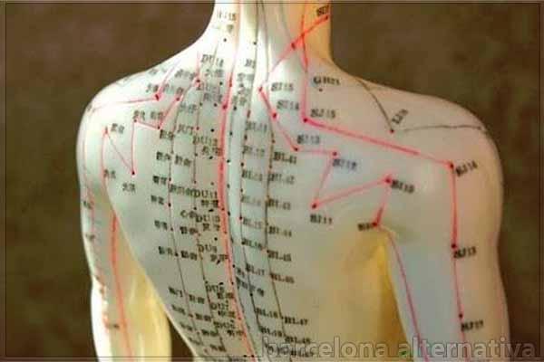centros acumuladores de energía en el cuerpo humano