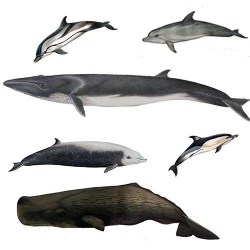 BarcelonaSail 6 most important mammals in the Mediterranean