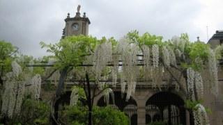 jardins-merce-rodoreda-4