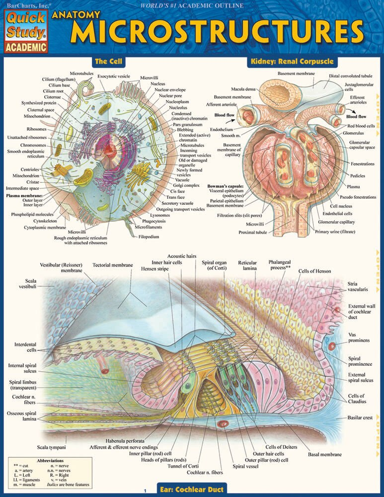 Quick Study QuickStudy Anatomy: Microstructures Laminated Study Guide BarCharts Publishing Academic Medical Reference Guide Cover Image