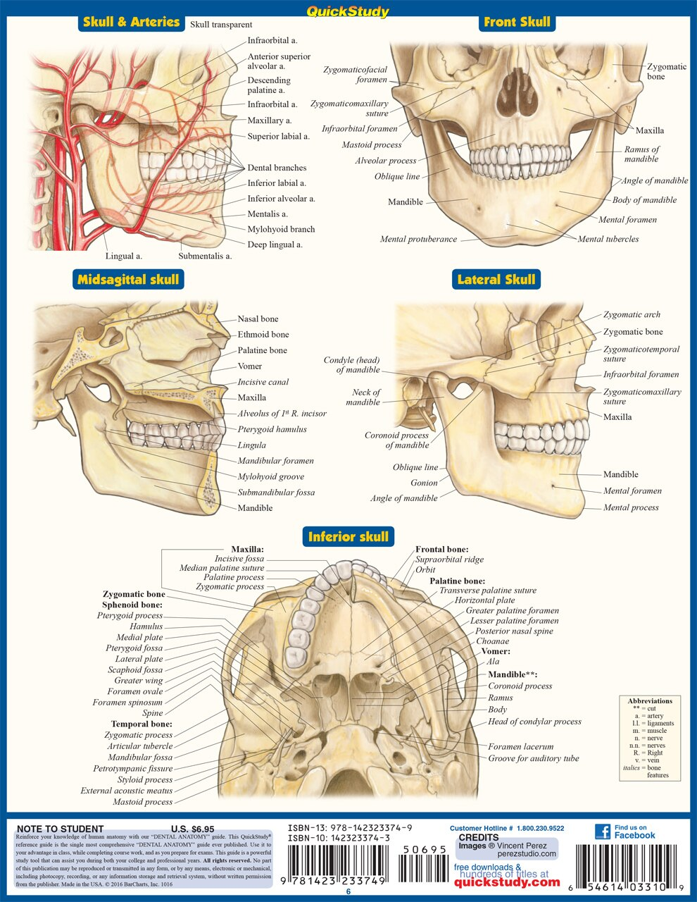 QuickStudy Quick Study Dental Anatomy Laminated Study Guide BarCharts Publishing Medical Study Guide Back Image