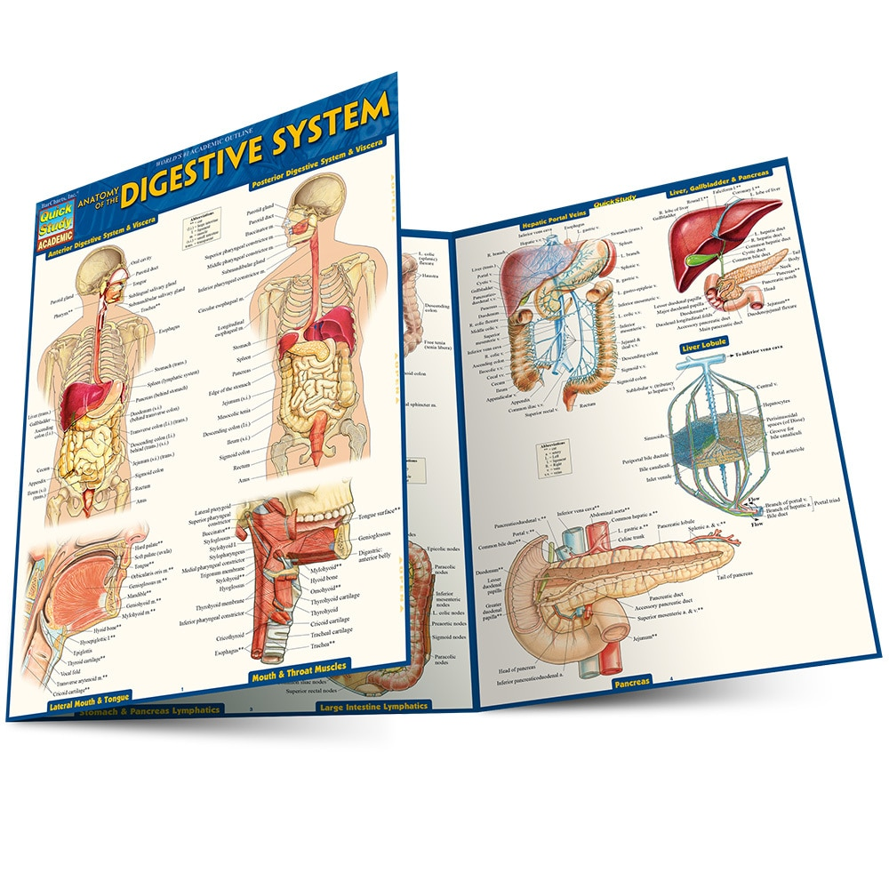 Quick Study QuickStudy Anatomy of the Digestive System Laminated Study Guide BarCharts Publishing Main Image