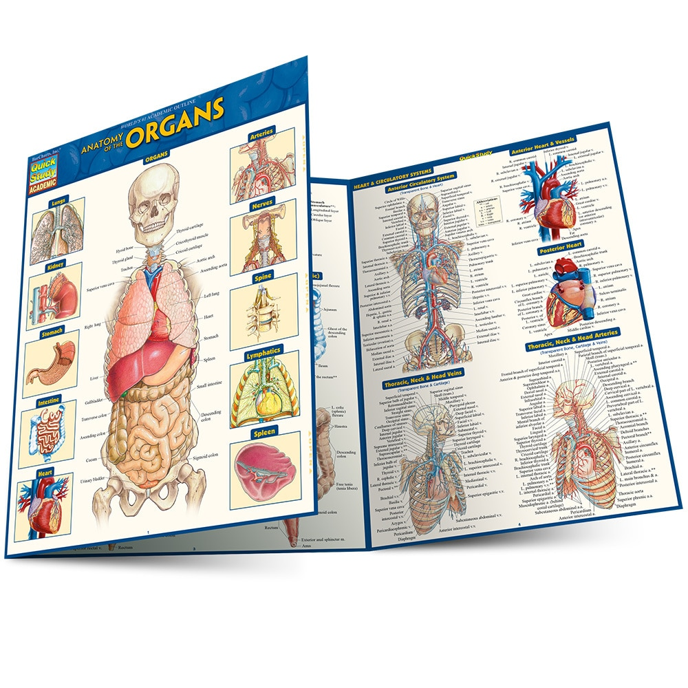 Quick Study QuickStudy Anatomy of the Organs Laminated Study Guide BarCharts Publishing Medical Education Main Image