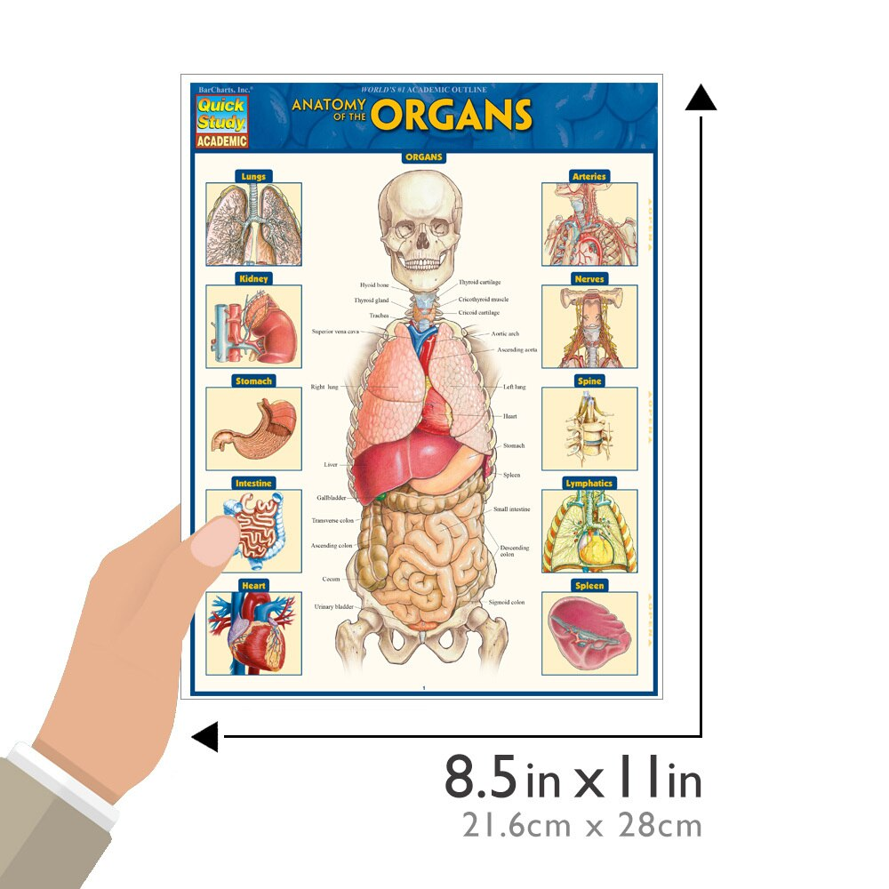 Quick Study QuickStudy Anatomy of the Organs Laminated Study Guide BarCharts Publishing Medical Education Guide Size