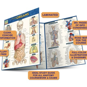 Quick Study QuickStudy Anatomy of the Organs Laminated Study Guide BarCharts Publishing Medical Education Guide Benefits
