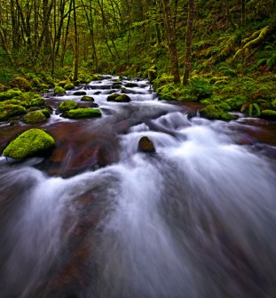 <p>Club moss covered rainforest surrounds fast moving water.</p>