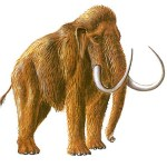 Hová tűntek a kazincbarcikai mamutok?