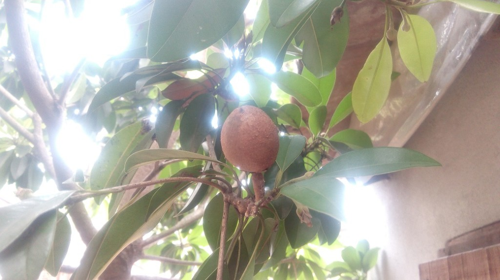 Chofeda Fruit 5