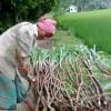 বৈচিত্র্যময় ফসল চাষী সুমন মিয়া