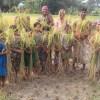 নবান্নে মাতলো কাইলাটির জনগোষ্ঠী