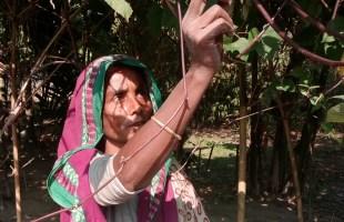 হোসনা আক্তারের বাড়িতে বৈচিত্র্যময় শিম চাষ