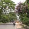 নির্মল বাতাসের শহরের শোভাবর্ধনে ওরা
