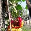 পুষ্টি যোগানে ফাঁকা জায়গায় সবজি চাষ রোবেয়া বেগমের
