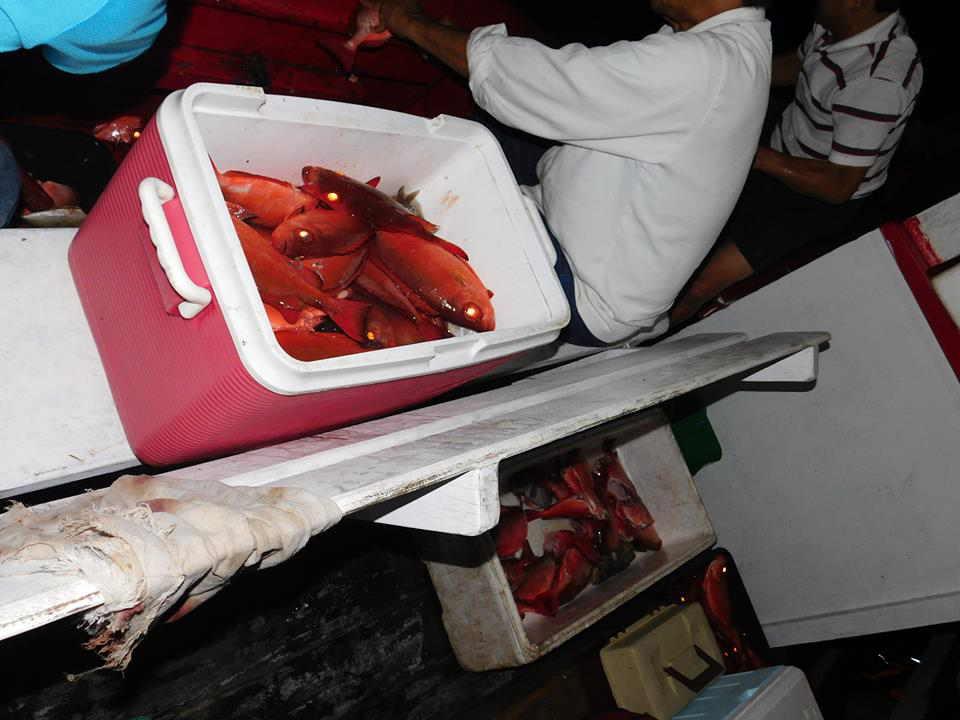 peixe-vermelhor-olho-de-cao-pescaria-ilha-de-buzios