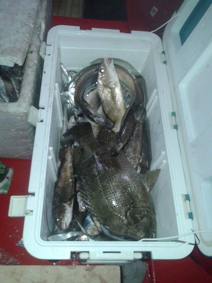 pesca-em-sao-sebastiao-e-ilha-bela