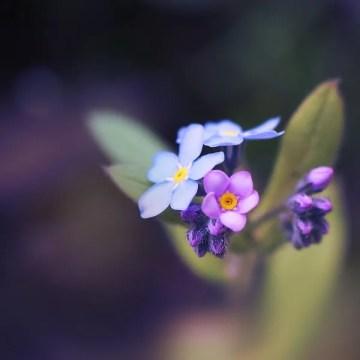 Poesía en Bardulias: Pude no serlo