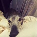 Poesía en Bardulias: A un perro Viejo