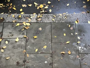 Poesía en Bardulias: Décimas de otoño