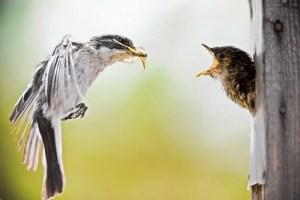 Poesía en Bardulias: Lo reconozco
