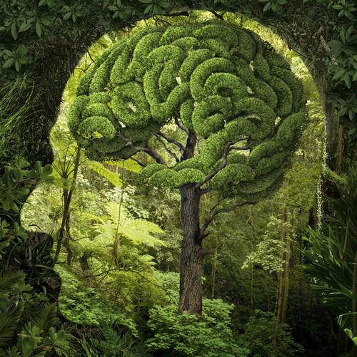 Brain Health 4