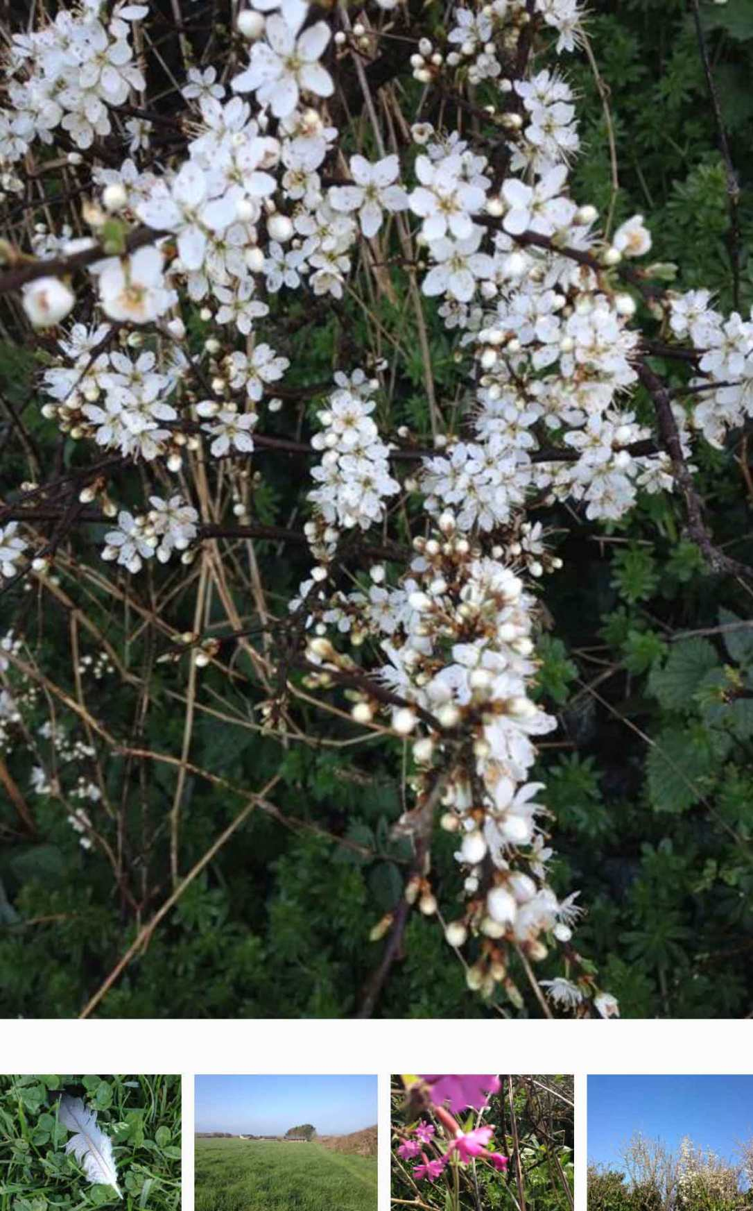 wildflowers, blossom, a feather and blue sky at barefoot glamping Cornwall
