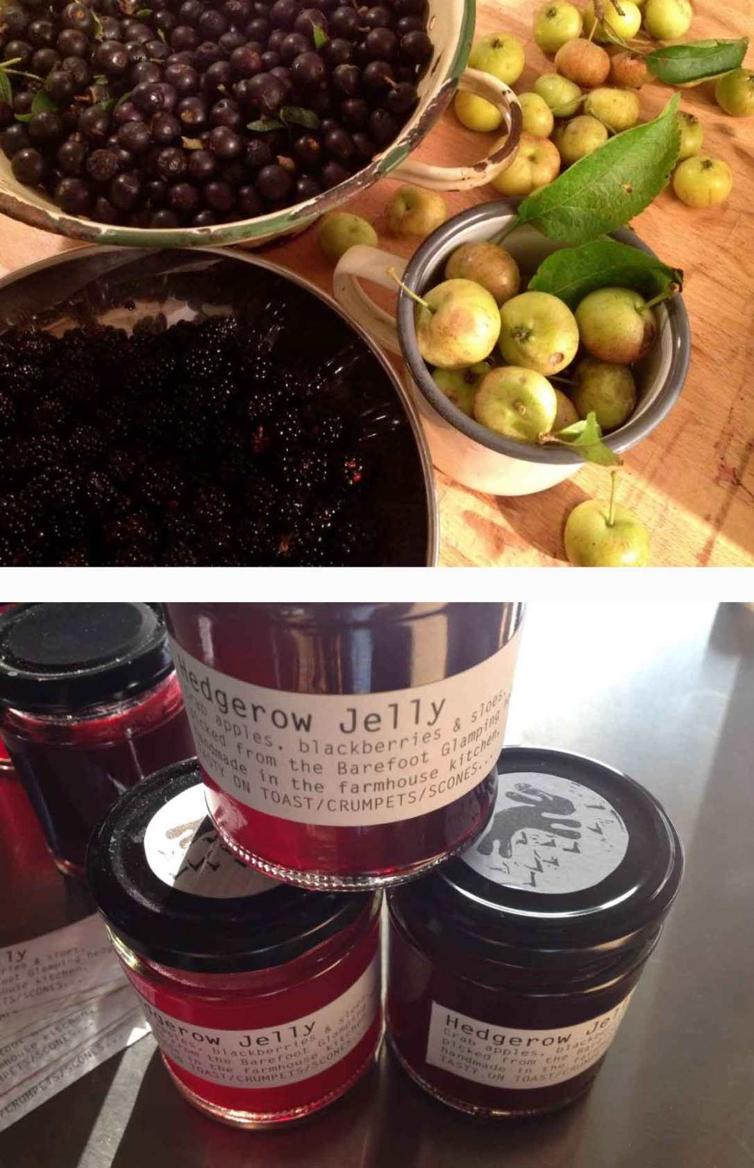 foraged sloe berries, blackberries and crab apples with jars of hedgerow jelly made at barefoot glamping Cornwall