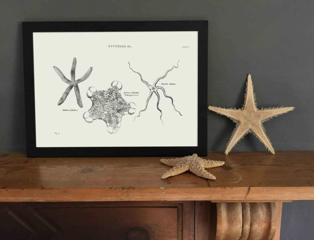starfish art print in black frame