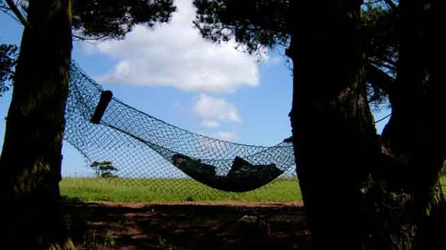 looking from the woods at the upcycled fishing net hammock with blue skies