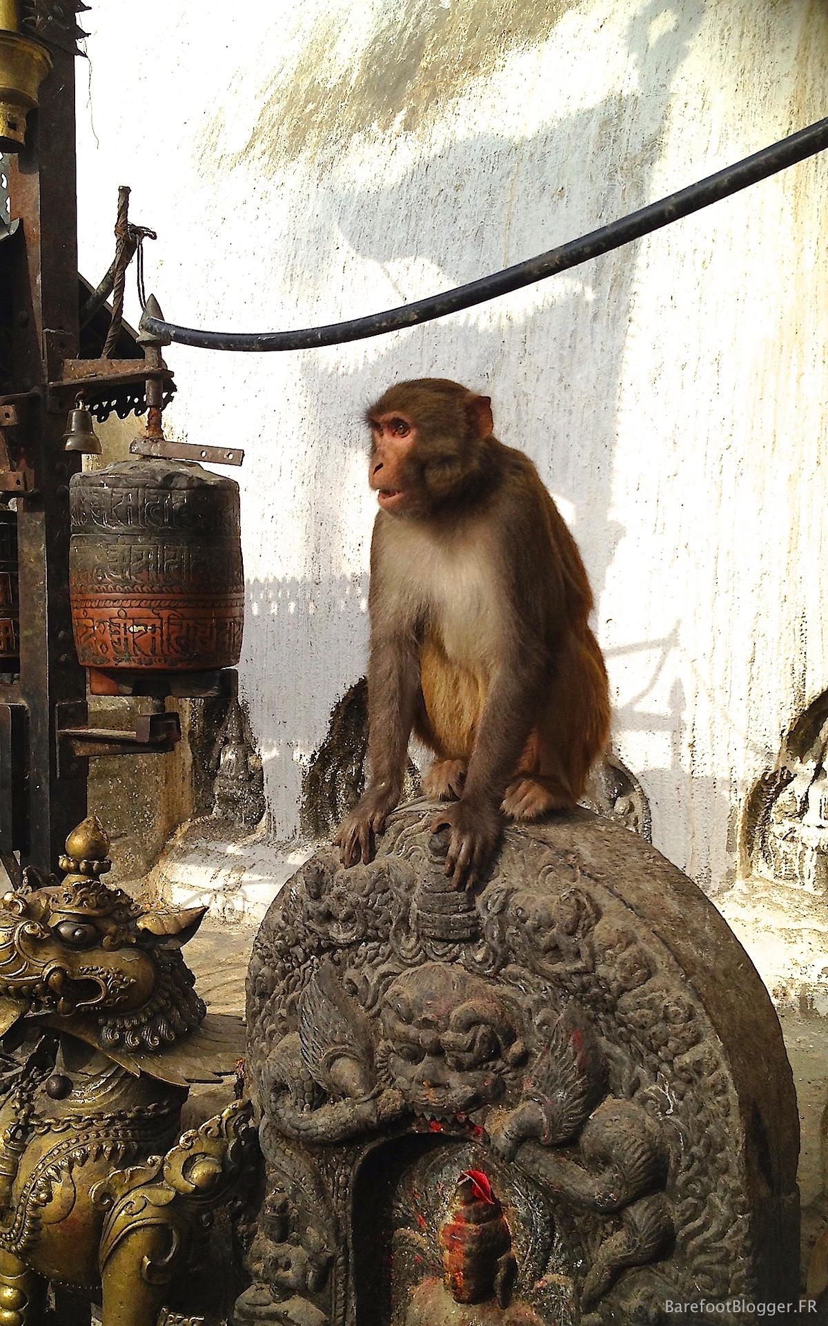 The Monkey Temple of Kathmandu
