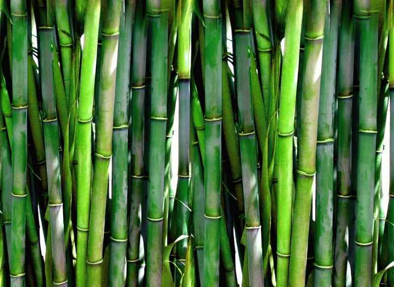 Bamboo PublicDomainPictures