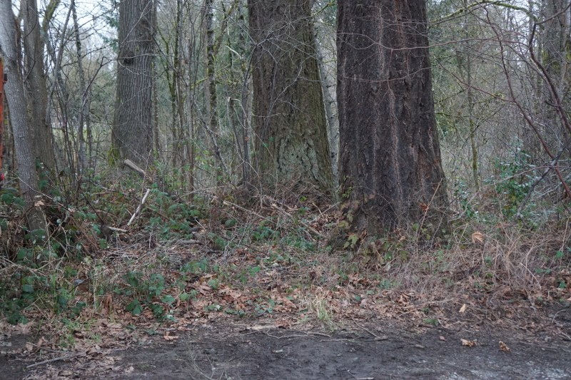 Bear Creek Natural Area Cleanup After