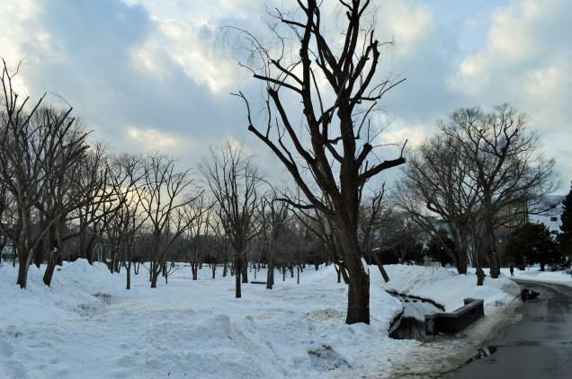 Hokkaido University Park Grounds