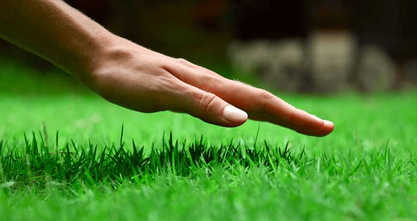 Lawn Care Blue Spring hand on Grass
