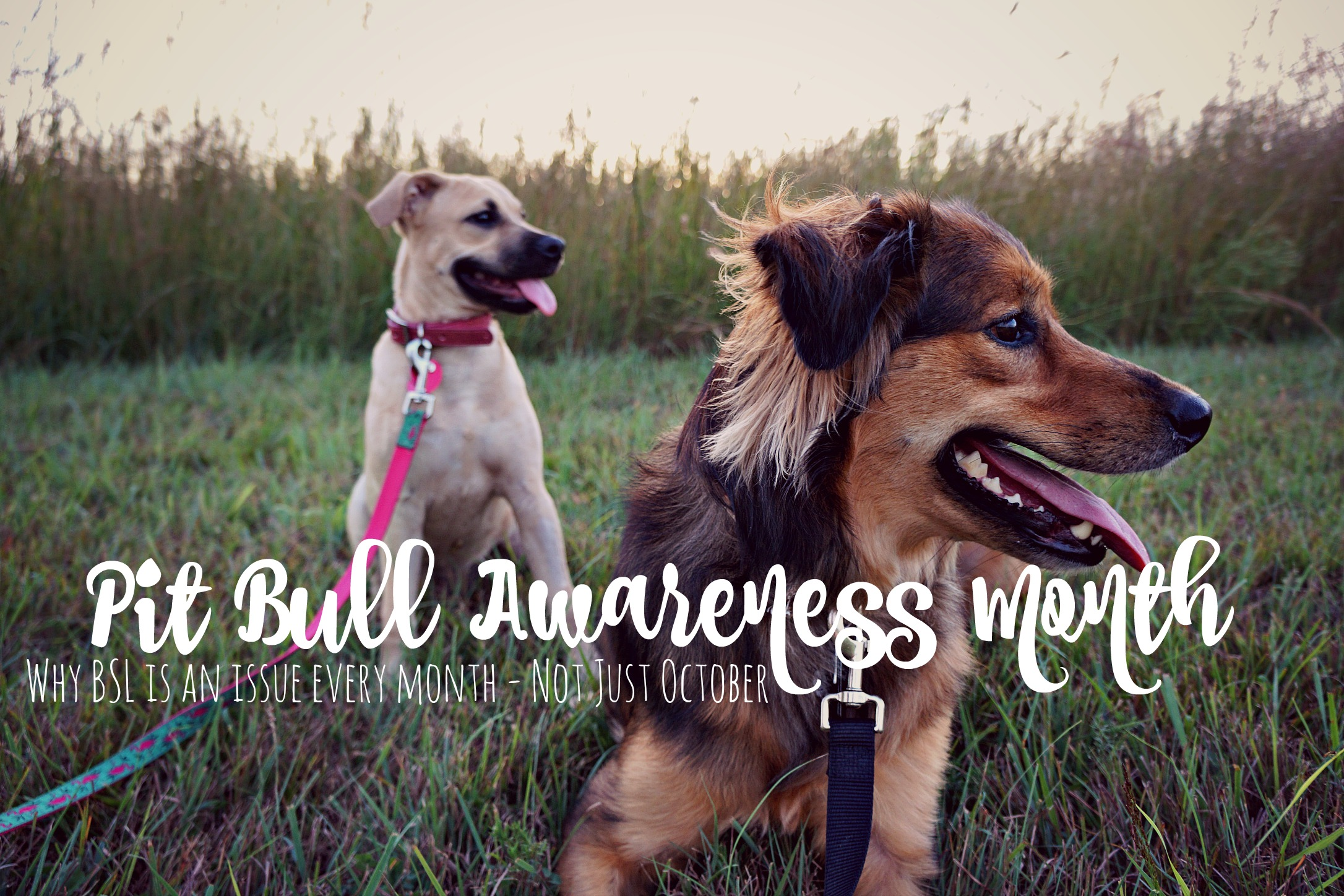 Pit Bull Awareness Month is Every Month