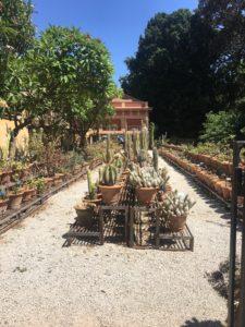 Botanisk hage med verdens største samling av sukkulenter
